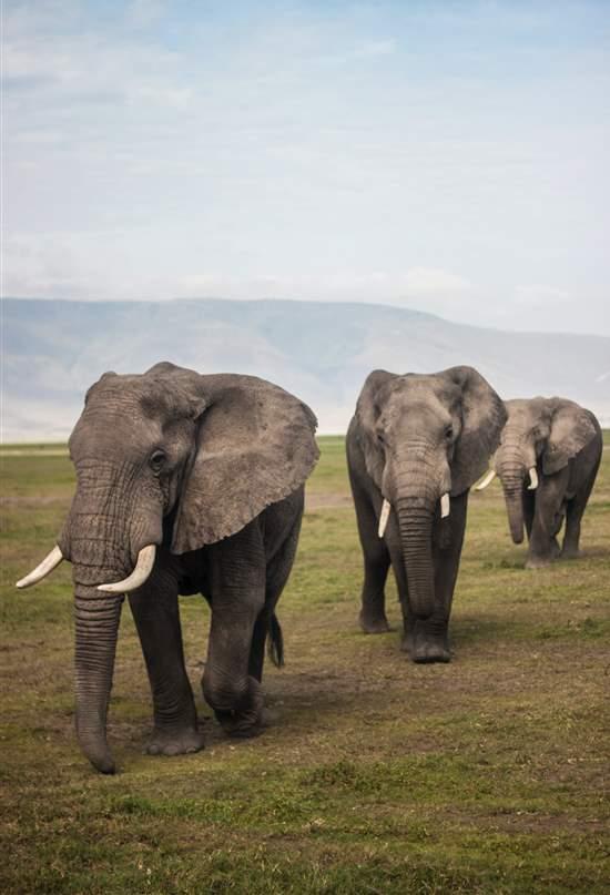 Ngorongoro, viaje a un cráter lleno de vida