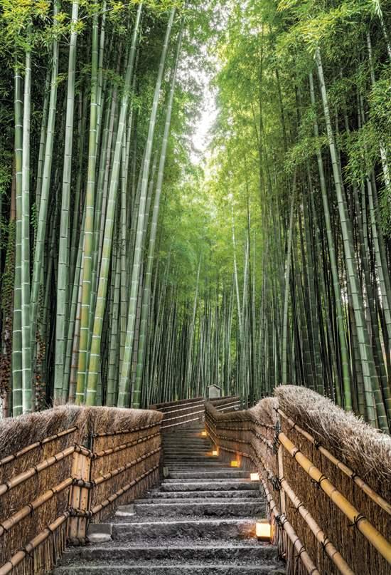 Japón: un viaje legendario de Kioto a Kagoshima