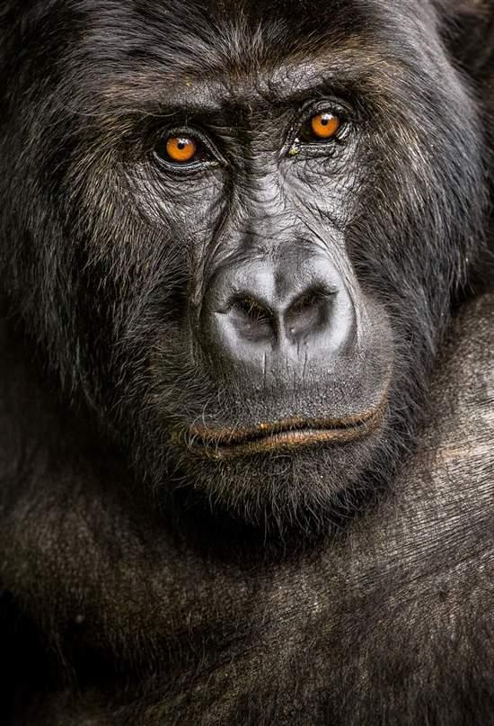 Los nuevos 'big five' de la fotografía de animales