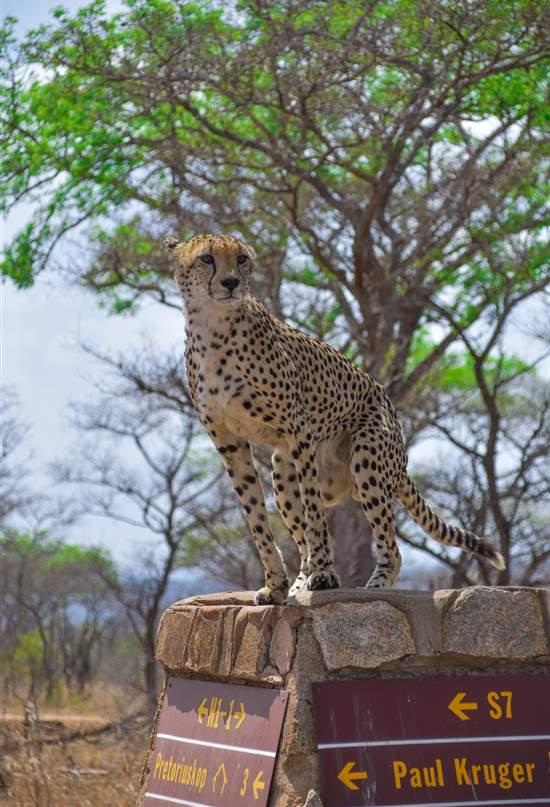 Vídeo: las maravillas naturales de Sudáfrica